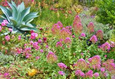 BEAUTIFUL GARDEN OF COLORFUL PLANTS AND FLOWERS Royalty Free Stock Images