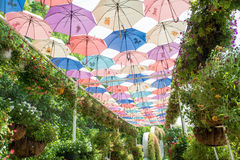 Beautiful garden decorated with colourful umbrellas Royalty Free Stock Image