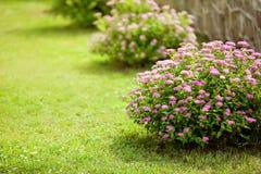 Beautiful garden details Stock Photos