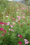 Beautiful garden Royalty Free Stock Photography