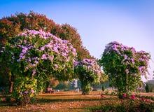 Beautiful Garden Stock Photo