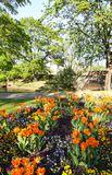 Beautiful garden flowers. Bright tulips blooming in spring park. Urban landscape with decorative plants. royalty free stock image