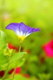 Beautiful garden flowers close up Royalty Free Stock Photo