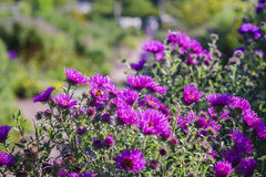 Beautiful garden with flowers. Of Malmo near castle, Sweden Stock Images