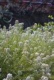 Beautiful garden flowers. Summer Background with beautiful white garden flowers Stock Photos