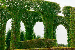 Beautiful garden with green hedges Stock Photos