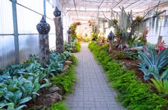 Beautiful garden in greenhouse royalty free stock photography