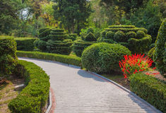 Beautiful garden with hedges Royalty Free Stock Photo