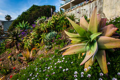 Beautiful garden in Laguna Beach, California. Stock Photo
