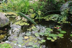 Beautiful garden lake. With many plants stock images