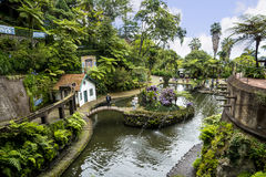 Beautiful Garden at Monte above Funchal Madeira. This wonderful garden is at the top of the cablecar from the seafront in Funchal. It is filled with trees Royalty Free Stock Photos