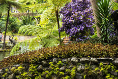 A Beautiful Garden at Monte above Funchal Madeira. This wonderful garden is at the top of the cablecar from the seafront in Funchal. It is filled with trees Royalty Free Stock Photos