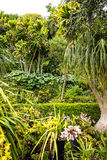 A Beautiful Garden at Monte above Funchal Madeira. This wonderful garden is at the top of the cablecar from the seafront in Funchal. It is filled with trees Royalty Free Stock Images