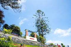A Beautiful Garden at Monte above Funchal Madeira. This wonderful garden is at the top of the cablecar from the seafront in Funchal. It is filled with trees Royalty Free Stock Image