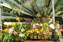 Beautiful garden of orchids of different colors in Vietnam, dalat. Flowers royalty free stock images