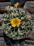 Garden flowers. Royalty Free Stock Image