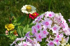 A beautiful bouquet of garden festive flowers. Royalty Free Stock Image