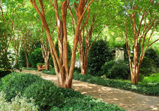 Beautiful garden path with dappled sunlight coming from crepe myrtle trees Royalty Free Stock Photo
