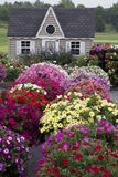 Beautiful Garden with Profusion of Flowers Royalty Free Stock Images