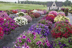 Beautiful Garden with Profusion of Flowers Stock Image