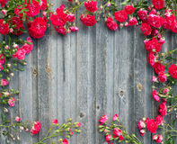 Beautiful garden red roses on weathered wood retro styled textured background. Romantic floral frame background.