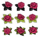 Beautiful garden rose in bloom illustration Royalty Free Stock Photo