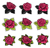 Beautiful garden rose in bloom illustration Stock Photos