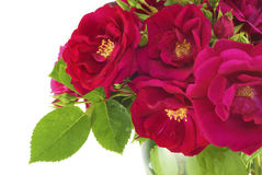 Beautiful Garden Roses In Vase Stock Photos