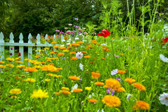 Beautiful garden In Sequim. Port angeles Washington State USA Stock Images