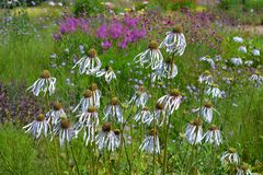 Garden view, coneflowers and colorful flowerbeds and borders in the Spring royalty free stock image