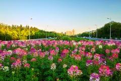The beautiful garden sunset landscape daqing Stock Photo