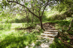 Beautiful garden with trees and stone path Royalty Free Stock Images
