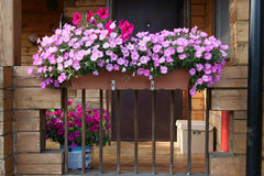 Beautiful Garden With Flower Box And Pot Plants On The Porch Royalty Free Stock Photography