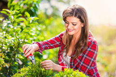 Beautiful gardener pruning little tree, green sunny nature Royalty Free Stock Photography