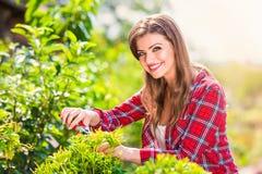 Beautiful gardener pruning little tree, green sunny nature Stock Image