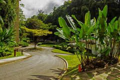 Beautiful Gardens at Harrison`s Cave in Barbados stock photo