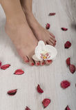 Beautiful gel red pedicure with orchid and petals around. Beautiful red pedicure with orchid and petals around Royalty Free Stock Image