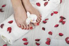 Beautiful gel red pedicure with orchid and petals around on white towel. Beautiful red pedicure with orchid and petals around barefoot Stock Photos