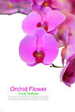 Beautiful gentle branch of white romantic orchid flowers isolate Royalty Free Stock Photos