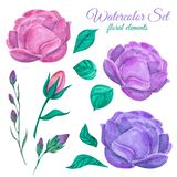 Beautiful gentle peonies. Green leaves. Watercolor set. Beautiful gentle peonies. Green leaves and stems. Watercolor set to create images. For printing cards stock images