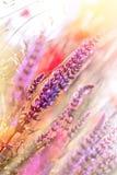 Beautiful, gentle purple flower Stock Images