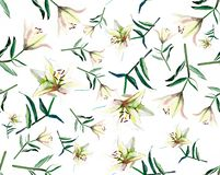 Beautiful gentle refined spring composition of white beige powdery lilies on white background watercolor. Hand illustration Stock Photos