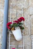 Beautiful geranium flowers stock photos