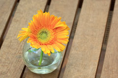 Beautiful gerbera or Barberton daisy Stock Photos