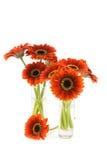 Beautiful gerbera bouquet. Royalty Free Stock Photo