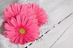 Beautiful gerbera flower Royalty Free Stock Photo