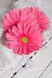 Beautiful gerbera flower Stock Photo