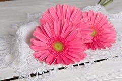 Beautiful gerbera flower Royalty Free Stock Image