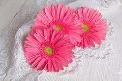 Beautiful gerbera flower Stock Photography