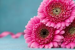 Beautiful pink gerbera flowers on turquoise table. Greeting card for Birthday, Woman or Mothers Day. royalty free stock image